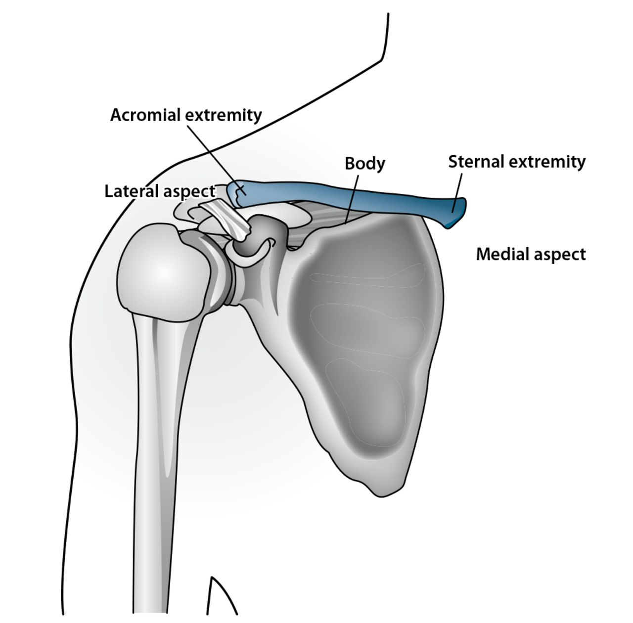 Forensic Age Estimation Using the Medial Clavicular Epiphysis: A ...